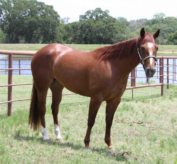 Pritchett Cutting Horses - Cutting Horses and Cutting Horse